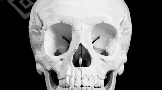 Cranio - Stampa3d